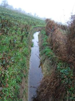 Environnement Nantes - Eaux de surfaces - Aménagement de noues et de bassins de surface - Nantes Philippe BERLANDIER
